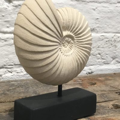 Small ammonite form