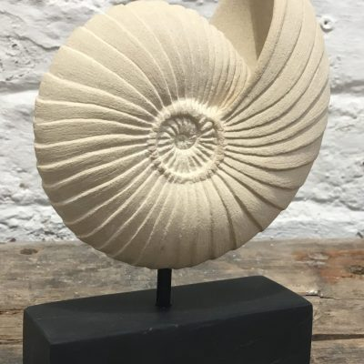Ammonite form